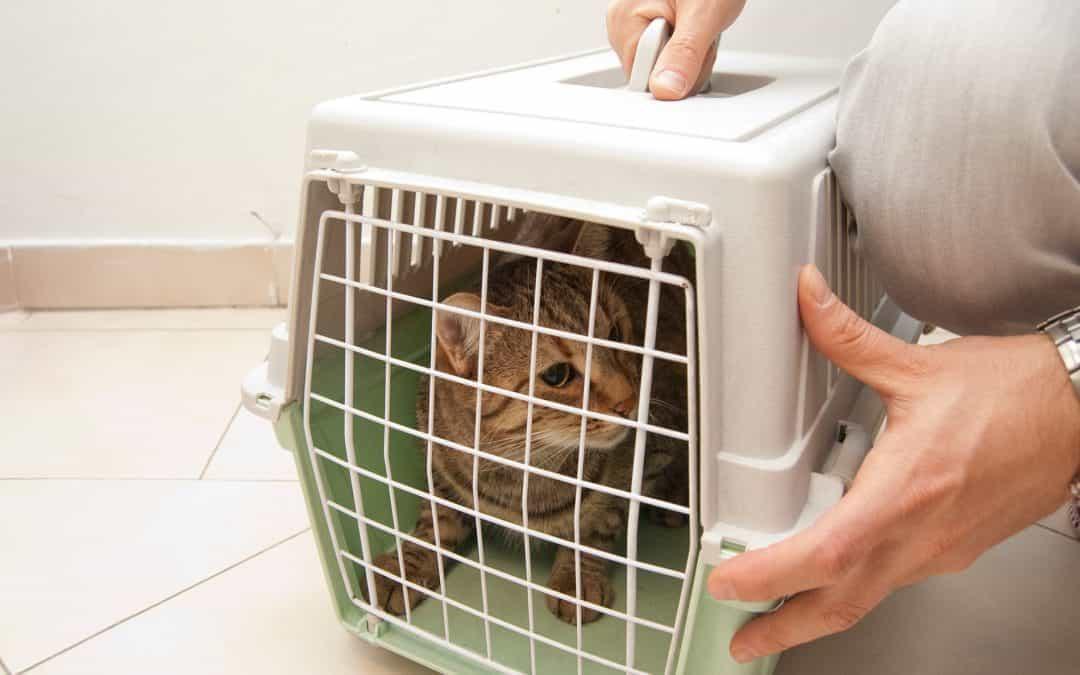 Транспортировка домашних животных