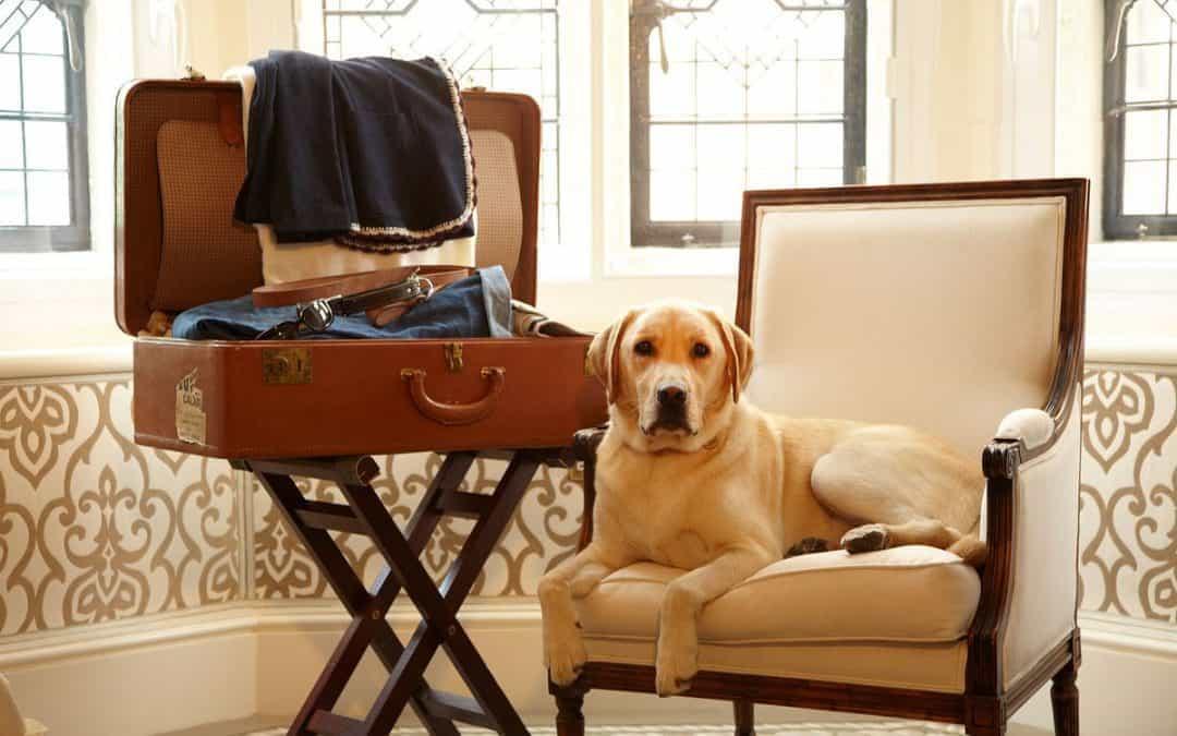 Переезд с домашними животными